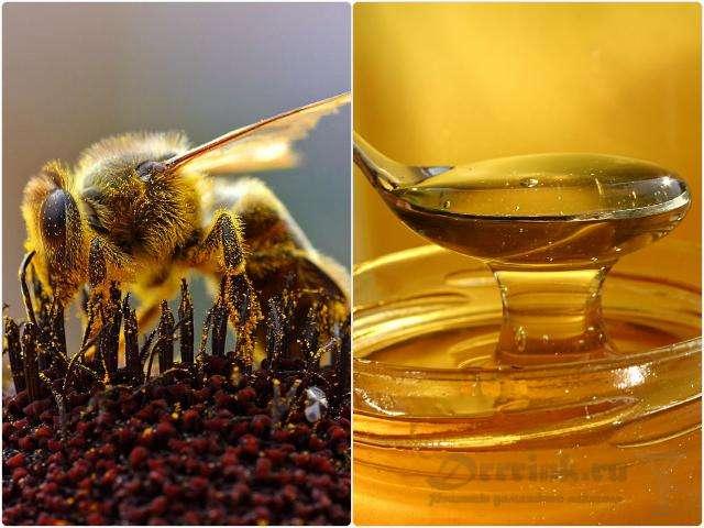 Мед как основа для самогона